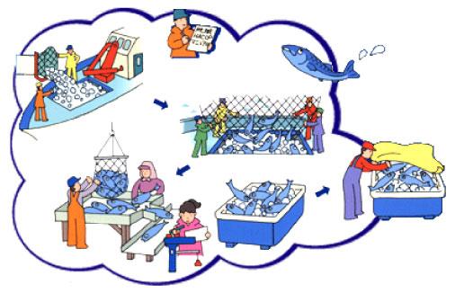 標津町地域HACCP対応漁船